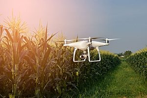 unmanned drone flying in a corn field which requires drone insurance before the land owners can permit